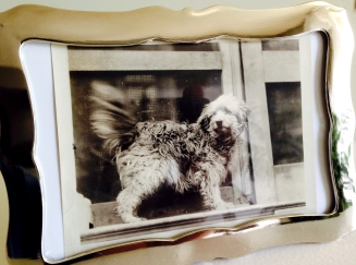 The photograph in silver frame referenced above.